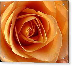 Acrylic Print featuring the photograph Peach Rose by Gerry Bates