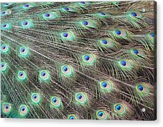Acrylic Print featuring the photograph Peacock Feather Fiesta  by Diane Alexander