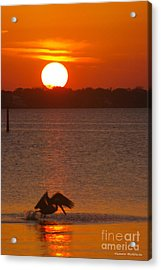 Pelican Sunset Acrylic Print by Tannis  Baldwin