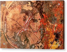 Petrified Wood Detail Acrylic Print