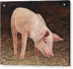 Pig Acrylic Print by David Stribbling