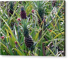 Pineapple Dance Acrylic Print