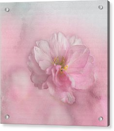 Acrylic Print featuring the photograph Pink Blossom by Annie Snel
