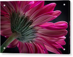 Acrylic Print featuring the photograph Pink Flower by Edgar Laureano