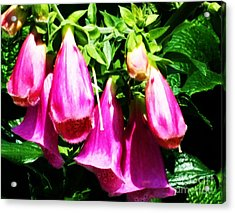 Acrylic Print featuring the photograph Pink Flower by Rose Wang