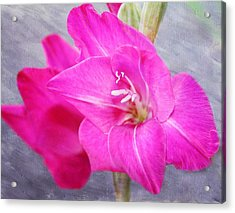 Pink Gladiola Acrylic Print by Cathie Tyler