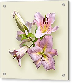 Pink Lilies On Cream Acrylic Print
