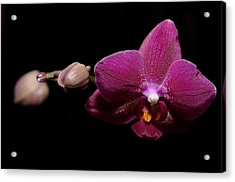 Pink Orchid Acrylic Print by Tommytechno Sweden