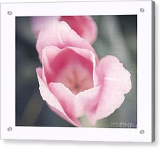 Pink Tulip  Acrylic Print by Artist and Photographer Laura Wrede