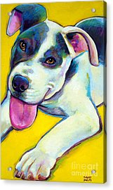 Pit Bull Puppy Acrylic Print by Robert Phelps