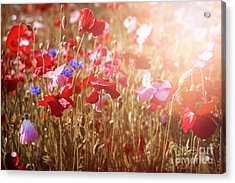 Poppies In Sunshine Acrylic Print