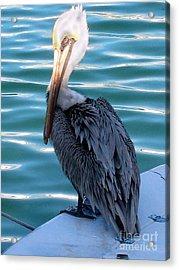 Precious Pelican Acrylic Print by Claudette Bujold-Poirier