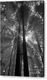 Presence Acrylic Print by Chuck Flewelling