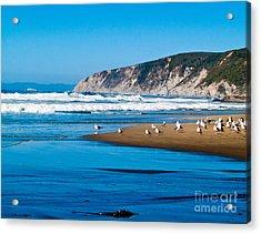 Pt Reyes National Seashore Acrylic Print