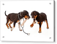 Puppy Veterinarian And Patient Acrylic Print