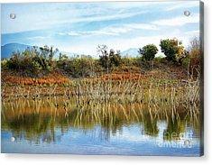 Quarry Lakes Acrylic Print by Ellen Cotton
