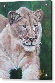 Queen Of The Beast,lioness Acrylic Print