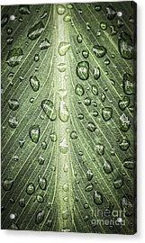 Raindrops On Green Leaf Acrylic Print by Elena Elisseeva