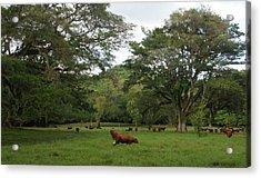 Rainforest At Ys River Acrylic Print by Olaf Christian