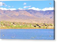 Range Cattle Acrylic Print by Marilyn Diaz