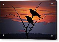 2 Ravens Acrylic Print