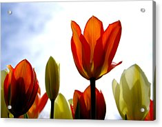 Acrylic Print featuring the photograph Reaching For The Sun by Marilyn Wilson