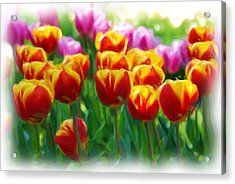 Red And Yellow Tulips Acrylic Print by Allen Beatty