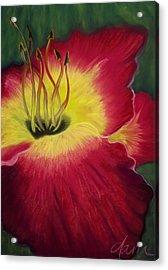 Red Day Lily Acrylic Print by Dana Strotheide