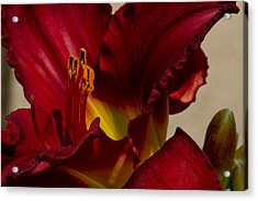Red Lily Acrylic Print by Ivete Basso Photography