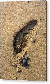 Releasing Green Sea Turtle, Hotelito Acrylic Print