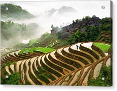 Rice Terraces Acrylic Print by King Wu