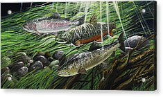 River Gems Acrylic Print by Juan Jose Serra