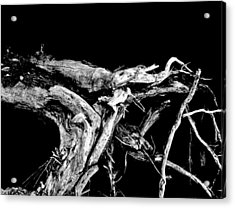 Acrylic Print featuring the photograph Roots 1 by Amar Sheow