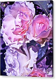 Rose 60 Acrylic Print by Pamela Cooper