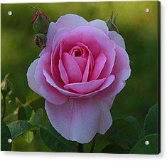 Rose Of Spring Acrylic Print by Edward Kocienski