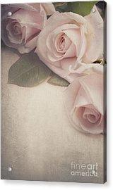 Roses Acrylic Print by Jelena Jovanovic