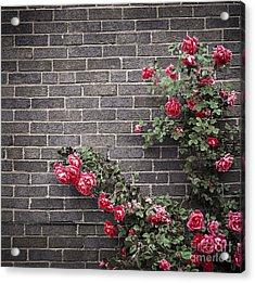 Roses On Brick Wall Acrylic Print