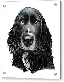 Acrylic Print featuring the drawing Rummy by Danielle R T Haney