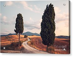 Rural Road With Cypress Tree In Tuscany Italy Acrylic Print by Matteo Colombo