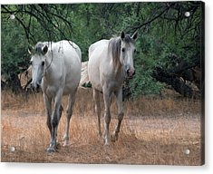 Salt River Wild Horse Acrylic Print