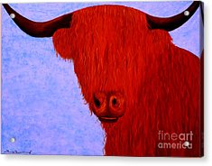 Scottish Highlands Cow Acrylic Print by Tim Townsend