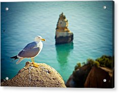 Seagull On The Rock Acrylic Print