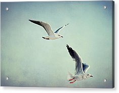Seagulls Acrylic Print by Heike Hultsch
