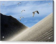 Seagulls Acrylic Print by Michael Mogensen