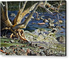 Sedona Dry Beaver Creek Sycamore Acrylic Print