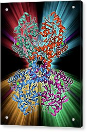 Selenocysteine Synthase Enzyme Molecule Acrylic Print