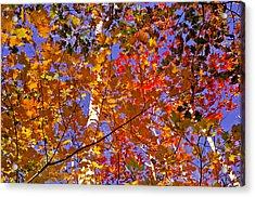 Shades Of Fall Acrylic Print by Dennis Bucklin