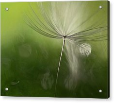 Shadows In The Green Acrylic Print