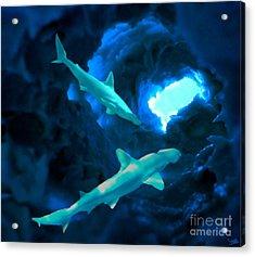 Shark Cave Acrylic Print