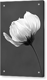 Simply Beautiful In Black And White Acrylic Print by Penny Meyers
